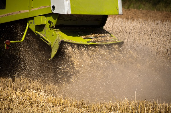 Straw Chaff Waste From Combine Harvester