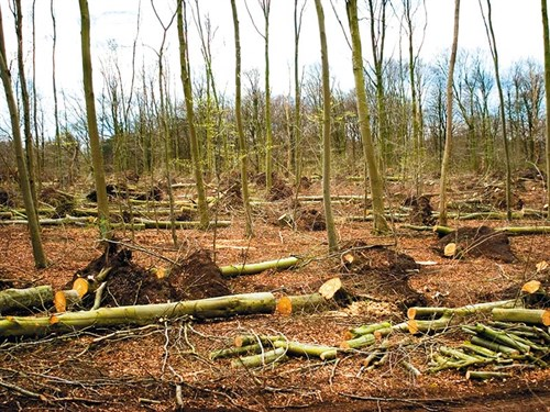 Loggingg2