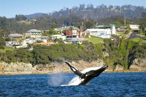 Whale watching in Eden