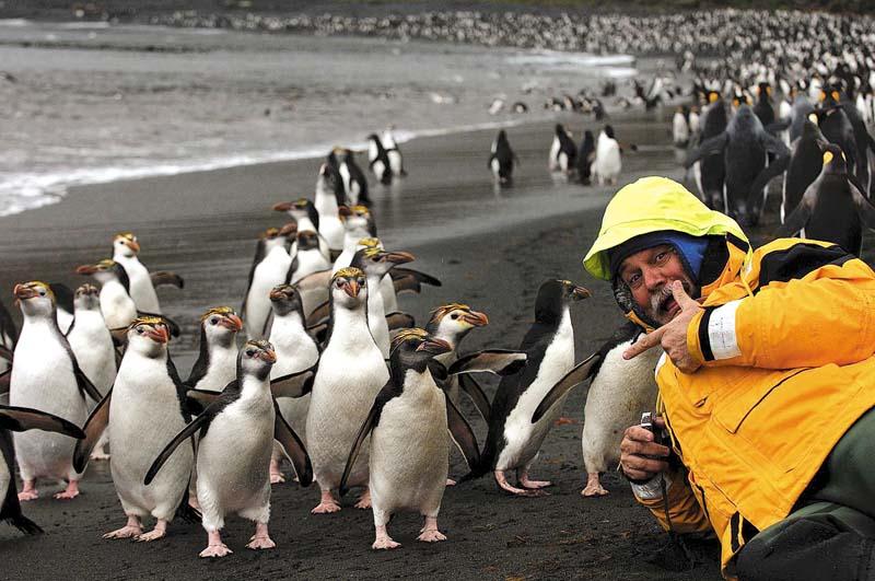 Penguins at Sandy Bay beach