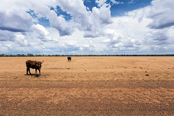 Drought stricken QLD
