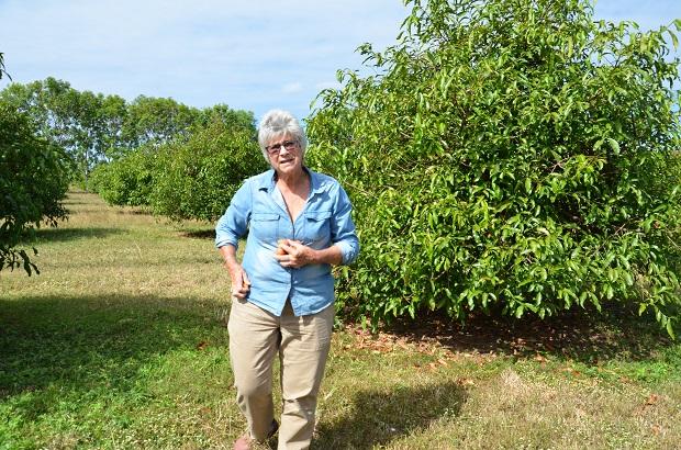 Helen Hill Achacha Plantation