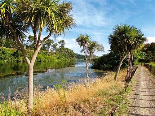 Waikato _wandering7