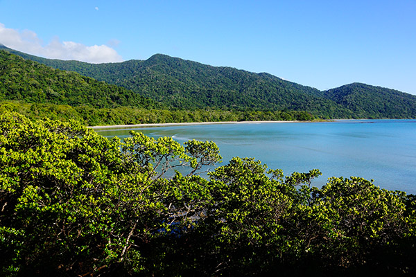 Daintree Rainforest Qld