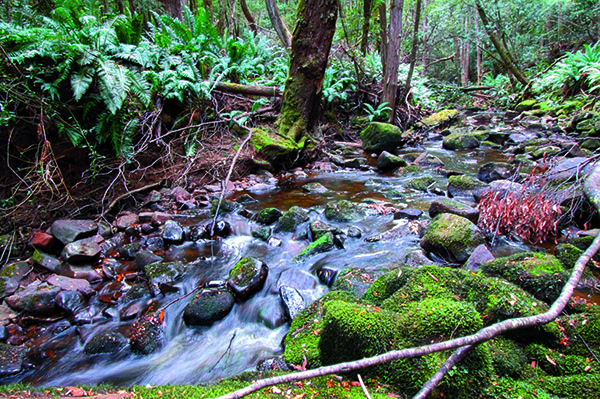 Far South Tasmania 1
