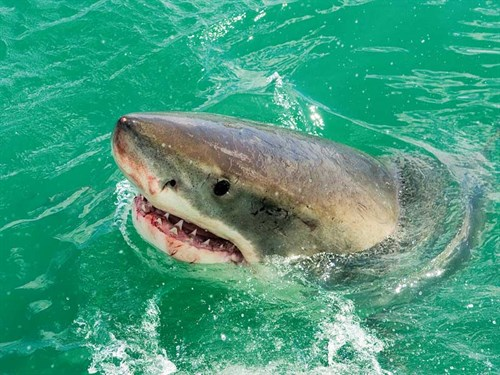 Sharks -7