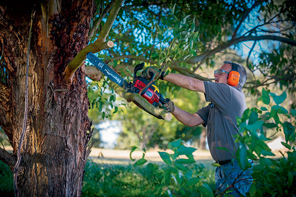 LEAD-PIC-Top -10-chainsaw -maintenance -tips