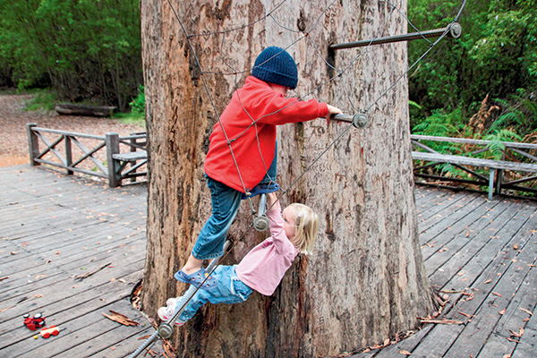Treetop -lookouts