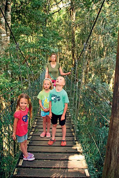 Tree -top -walks