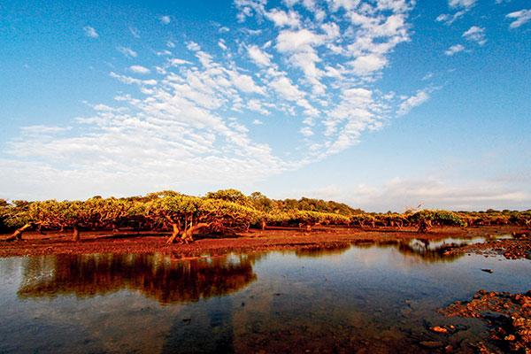 Mangrove -forests -fringe -the -Strait -near -Hervey -Bay