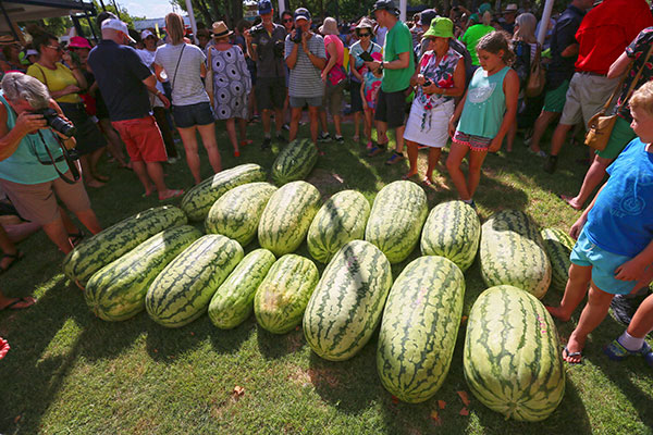 The -biggest -watermellons -are -inspected -by -the -crowd