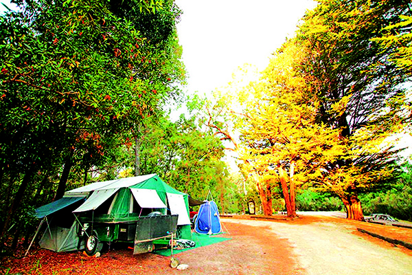Top Riverside Campsites Lower Glenelg Park