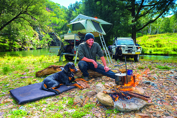 Camping With Dogs 2