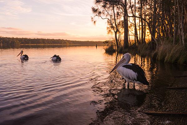 NSW Mid North Coast 8