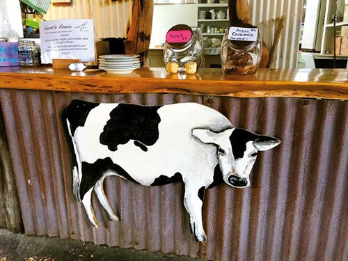 Counter -at -the -Cow -Cafe