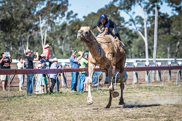 Camel -races -at -Tara -festival