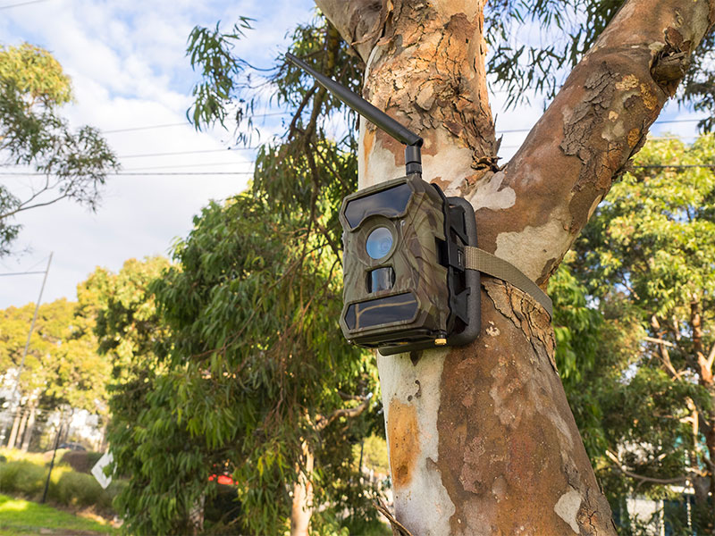 Silvan Selecta wide angle motion activated security camera mounted to a tree