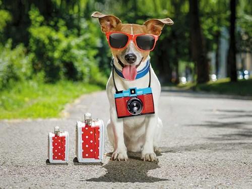 Cool -dog
