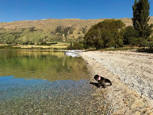 Taking -in -the -magnificent -Lake -Wakatipu