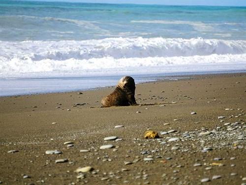 Lone -seal