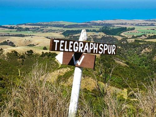 Telegraph -spur