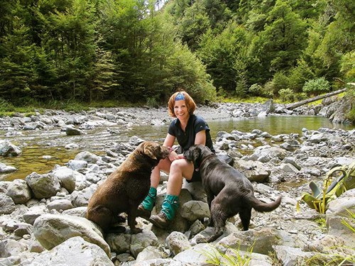 Two -keen -and -fits -labradors ,-Oroua -Valley ,-Ruahine -Forest -Park
