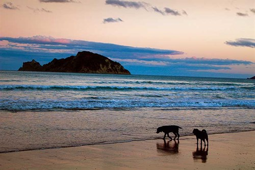 Nothing -like -an -evening -stroll ,-Anaura -Bay
