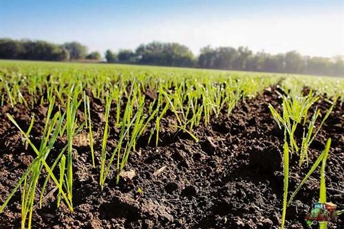 Slovakian -farming -004