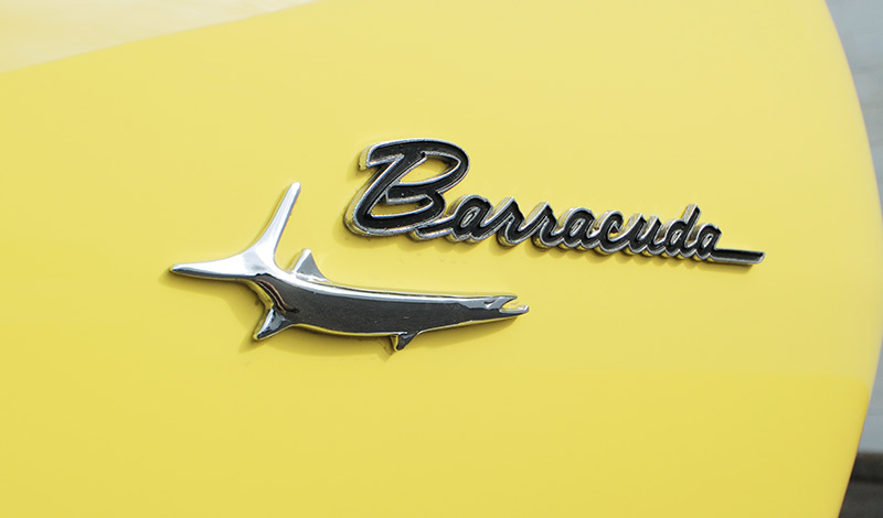 Barracuda -badge