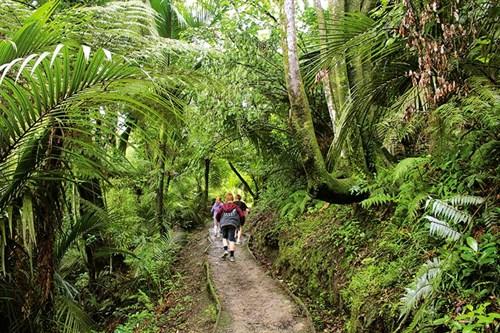 Papaitonga -SR---thick -lowland -forest