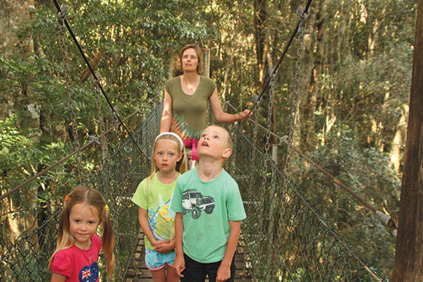 Children -on -the -treetop -walk -at -O'Reilly 's -Lamington -National -Park