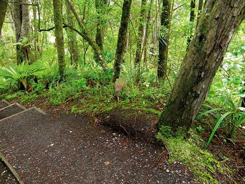 Whelan _15-We -see -a -kiwi -by -the -path -on -Ulva -Isaland