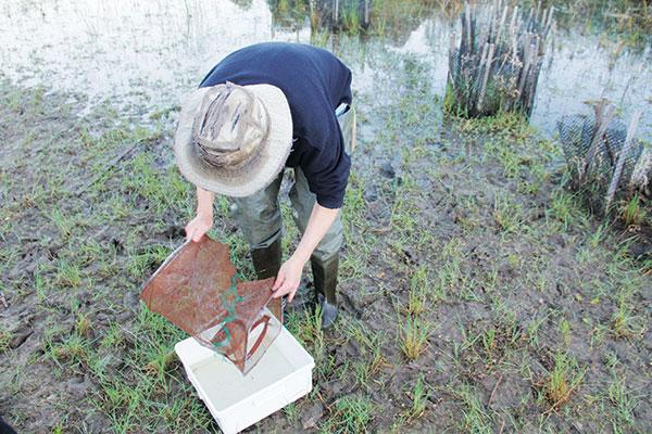 A-man -collecting -tadpoles