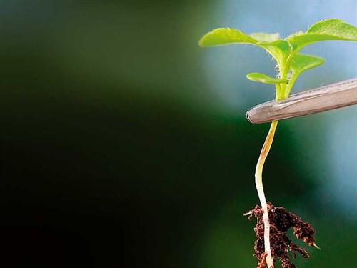 Plant -with -tweezers