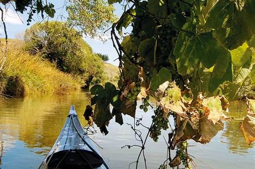 Whelan _8-Pataua -River
