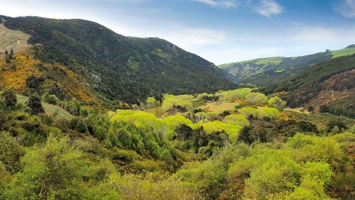 We -love -the -rugged -Otago -country