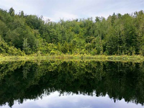 Reflections -Lake -Hanlon