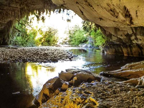 The -tea -coloured -Oparara -River -flows -swiftly -through -the -karst -landscape