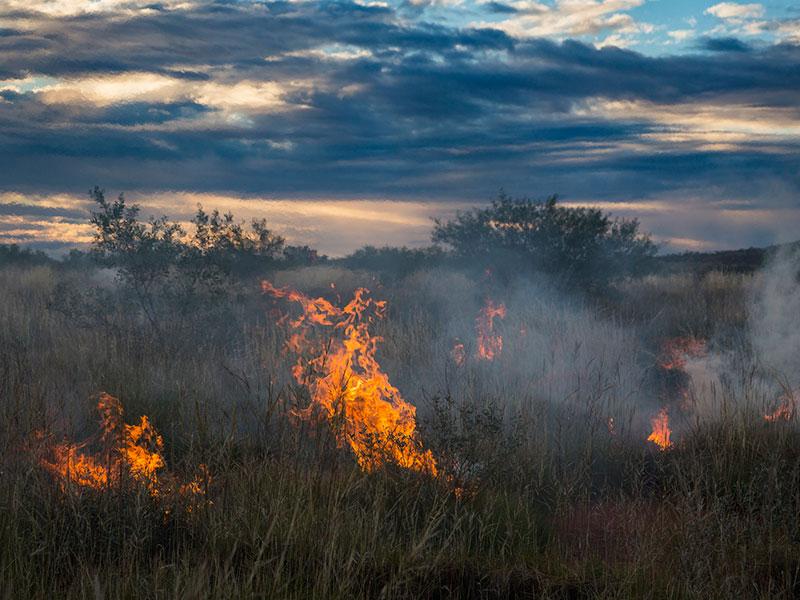 A grass fire in WA