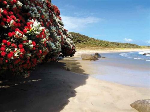 Whelan _3--Waikato -Bay ,-Karikari -Peninsula
