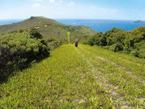 Whelan _8-Matai -Bay -Headland -Track