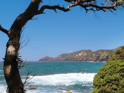 Whelan _9-A-rocky -cove -near -Kohotutea -Point -on -the -Matai -Bay -Headland -Walk