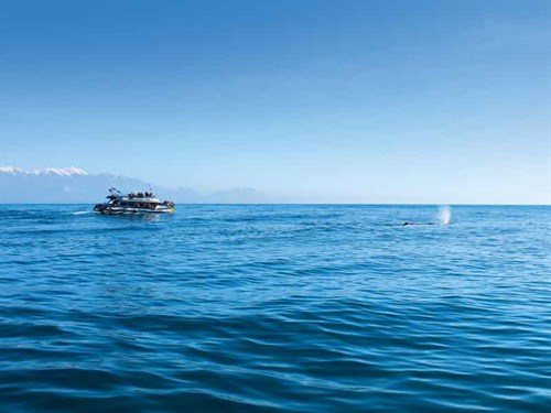 Kaikoura -whale -watching