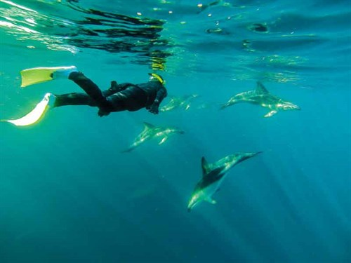 Swimming -with -the -dolphins