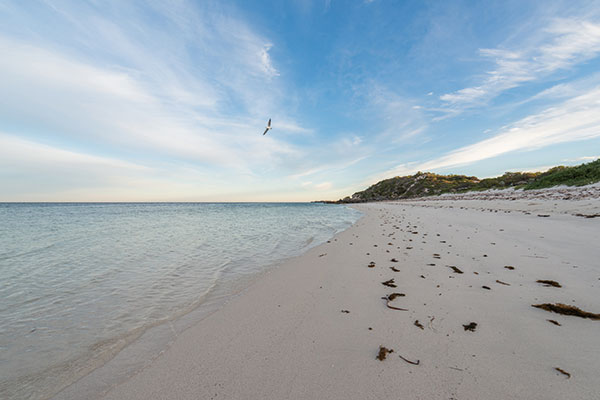 Milligan -Island