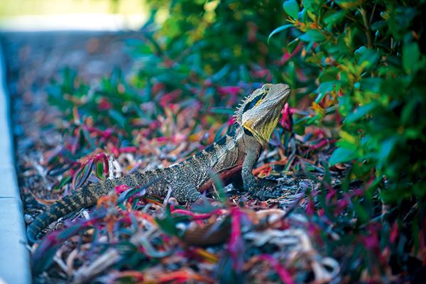 Lizard -at -Tweed -Coast -Holiday -Park