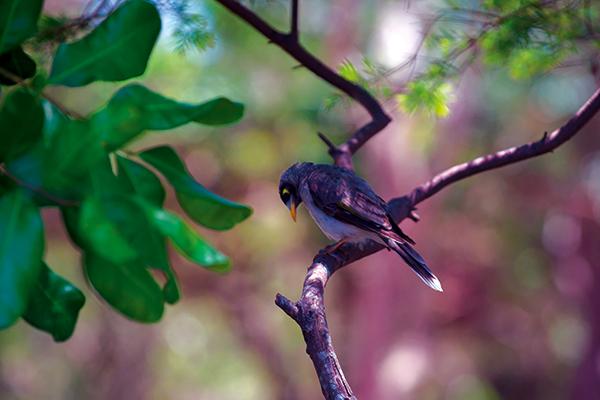 Bird -on -a -tree -branch -at -Tweed -Coast -Holiday -Park