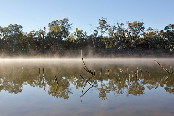 Morning -mist -on -the -Murray -River