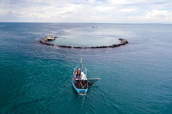 Queenscliff -Sea -All -Dolphin -Swims