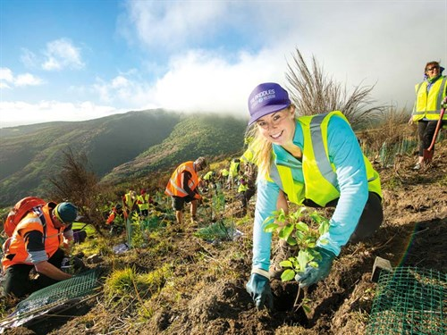 Port -Hills -Tree -Planting ---Christchurch -City -Council